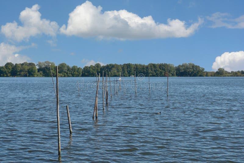 Lago Mueritzsee, distretto del lago Mecklenburg, Germania fotografia stock