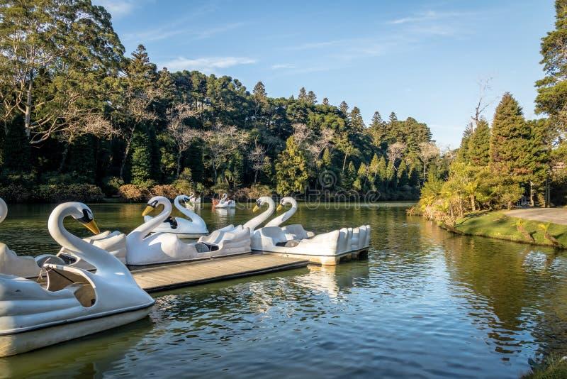 Lago murzyna Czerń jezioro z łabędź następu łodziami - Gramado, rio grande robi Sul, Brazylia zdjęcia royalty free