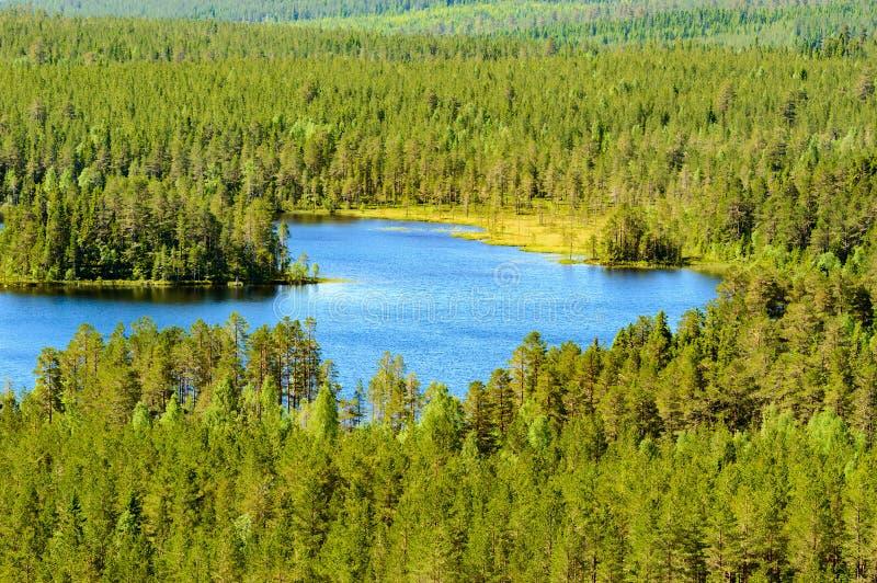 Lago na floresta foto de stock royalty free