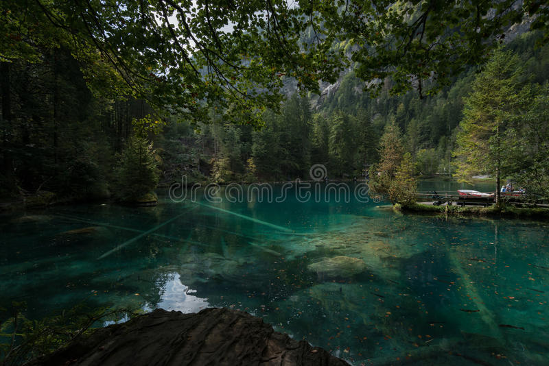 Lago na floresta fotografia de stock