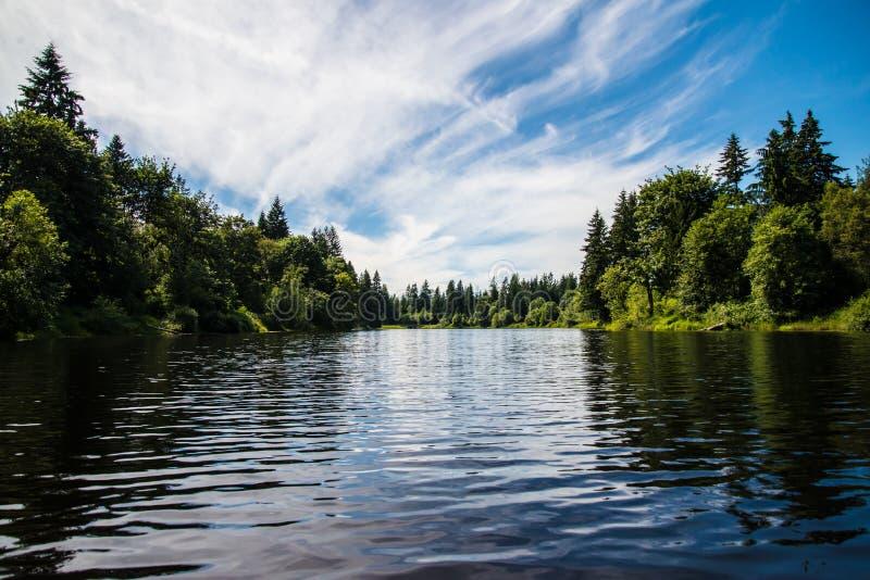 Lago nas madeiras fotos de stock royalty free