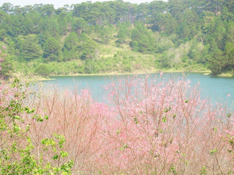 Lago nas montanhas, mola imagem de stock royalty free