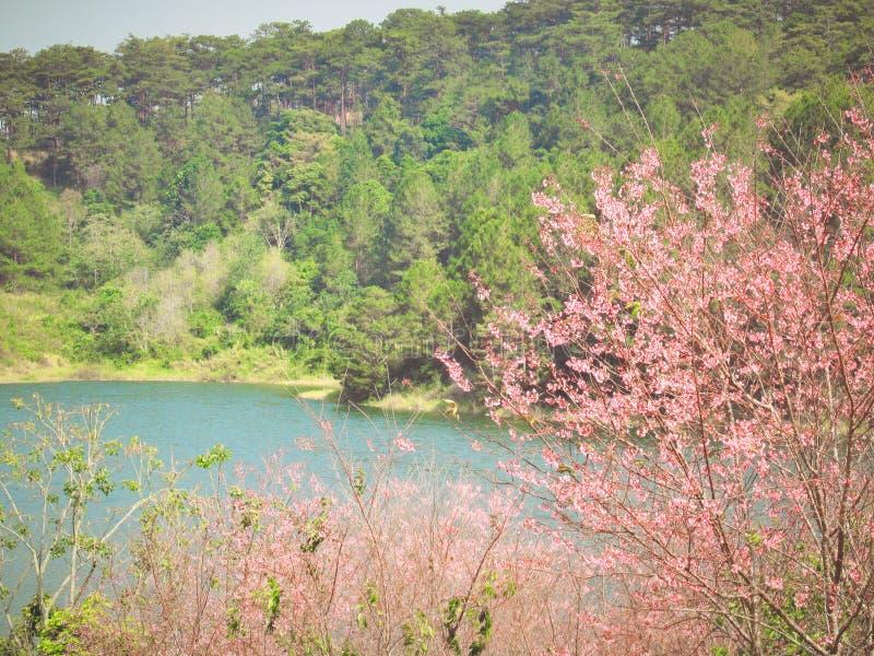 Lago nas montanhas, mola fotos de stock