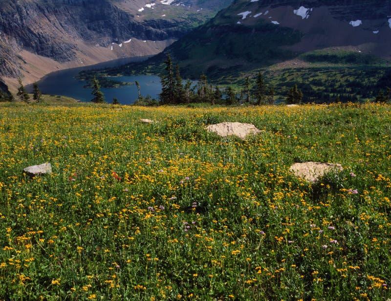 Lago nascosto di cui sopra del campo del Wildflower, Glacier National Park, Montana immagine stock libera da diritti