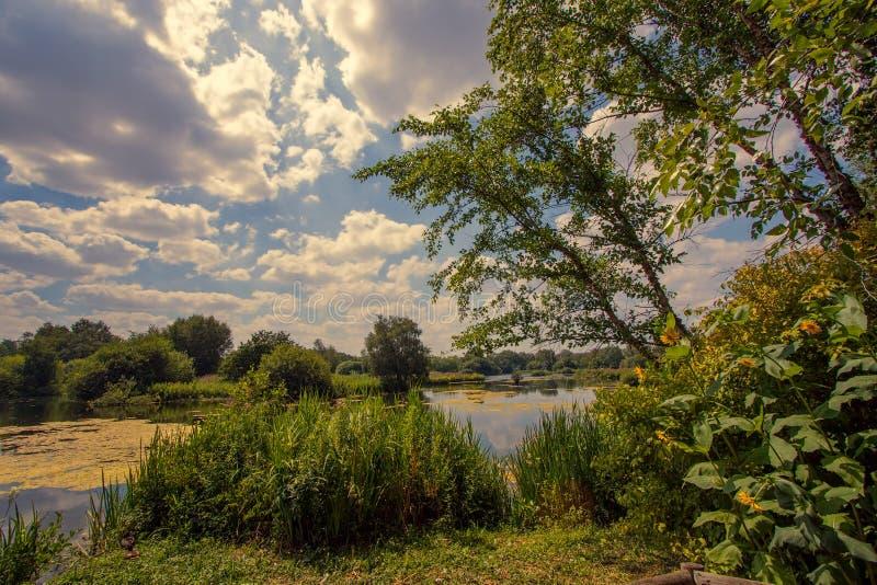 Lago natural da pesca do parkland Summe inglês idílico do campo imagem de stock