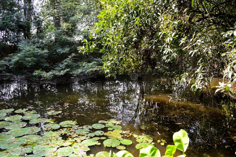Lago nature en el bosque Tailandia imagen de archivo libre de regalías