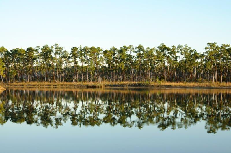 Lago nei terreni paludosi fotografia stock