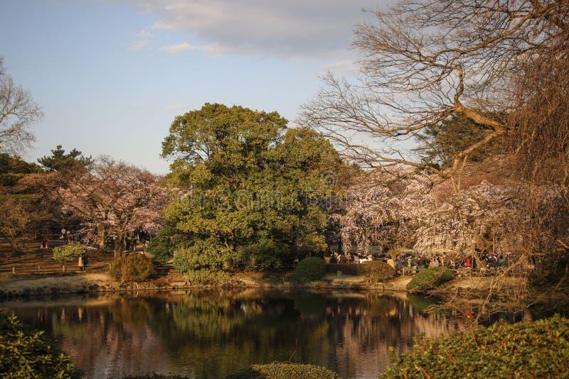 Lago nel giardino nazionale di Shinjuku Gyoen japan fotografia stock libera da diritti