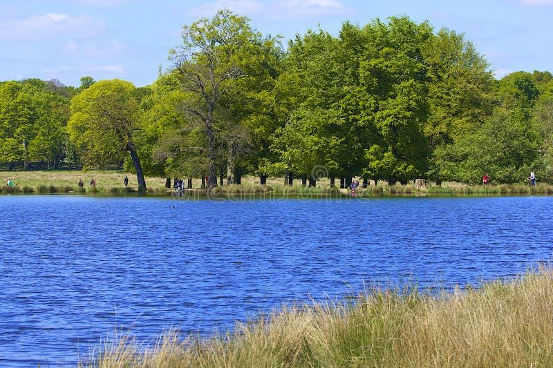 Lago nel parco di Richmond a Londra fotografie stock libere da diritti