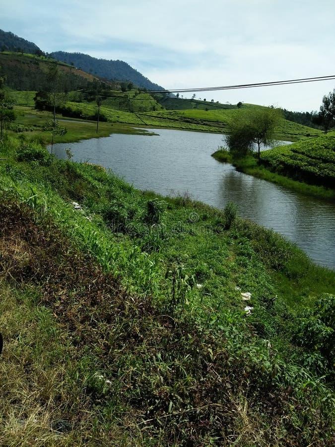Lago nel tè d'agricoltura sulla montagna immagine stock libera da diritti