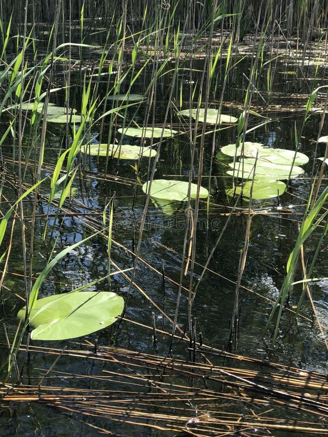 Lago nella favola immagini stock libere da diritti