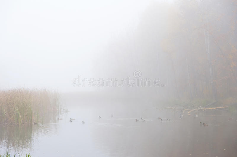 Lago nevoento imagens de stock royalty free