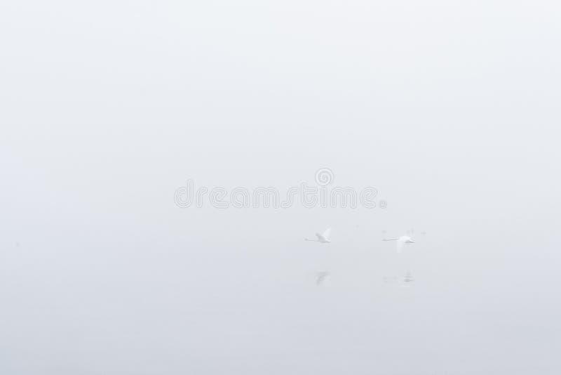 Lago nevoento imagem de stock