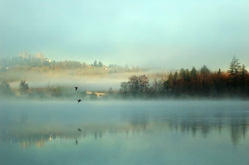 Lago nevoento dos cervos fotos de stock royalty free