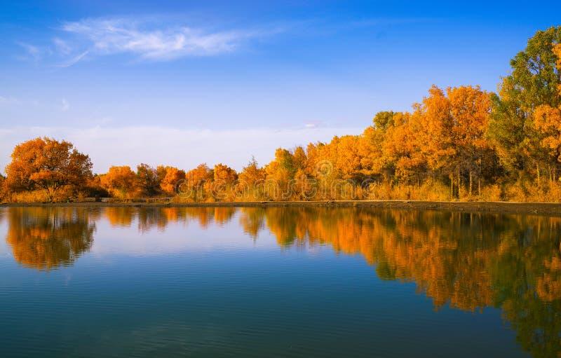 Lago no outono imagens de stock