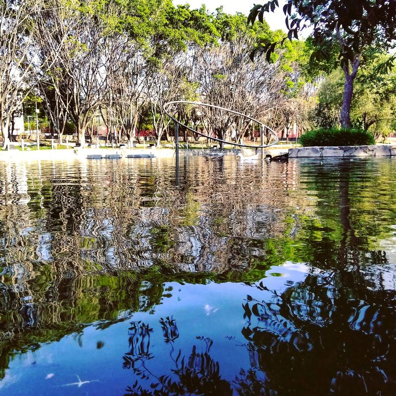 Lago no parque foto de stock