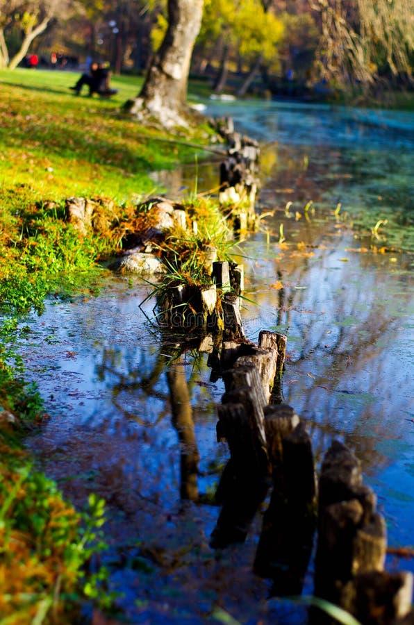 Lago no parque no outono fotografia de stock royalty free