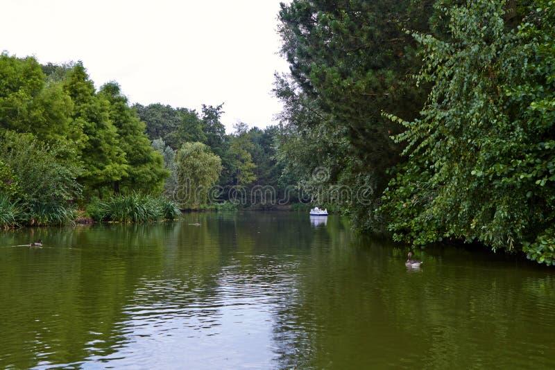 Lago no parque fotos de stock