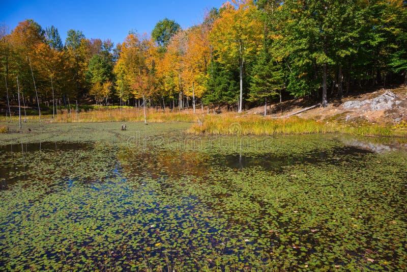Lago no safari - parque imagens de stock