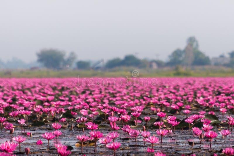 Lago Nong Harn, Tailandia fotografía de archivo
