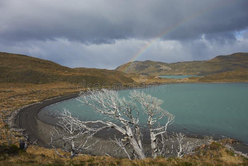 Lago Nordenskjold, Torres del Paine nationalpark, Chile royaltyfri bild