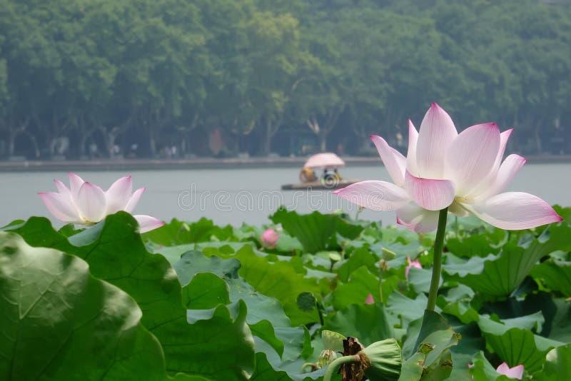 Lago ocidental Hangzhou fotografia de stock royalty free