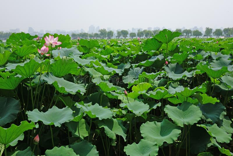 Lago ocidental Hangzhou imagens de stock