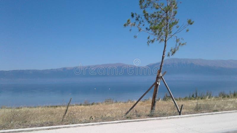 Lago Ohrid del árbol de Pogradeci al aire libre que viaja imágenes de archivo libres de regalías