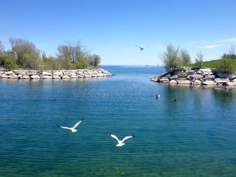 Lago ontario in primavera fotografia stock libera da diritti