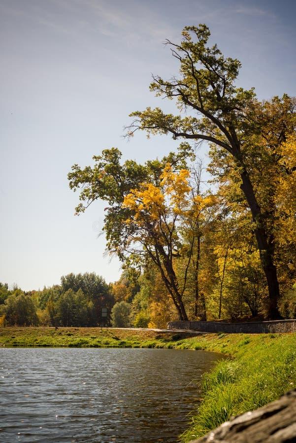 Lago otoñal en el parque, temporada de otoño imágenes de archivo libres de regalías