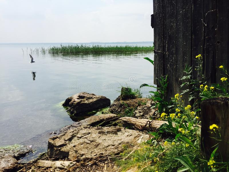 Lago Pássaro de vôo foto de stock