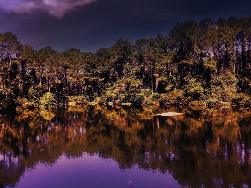 Lago púrpura florida en el bosque imagen de archivo