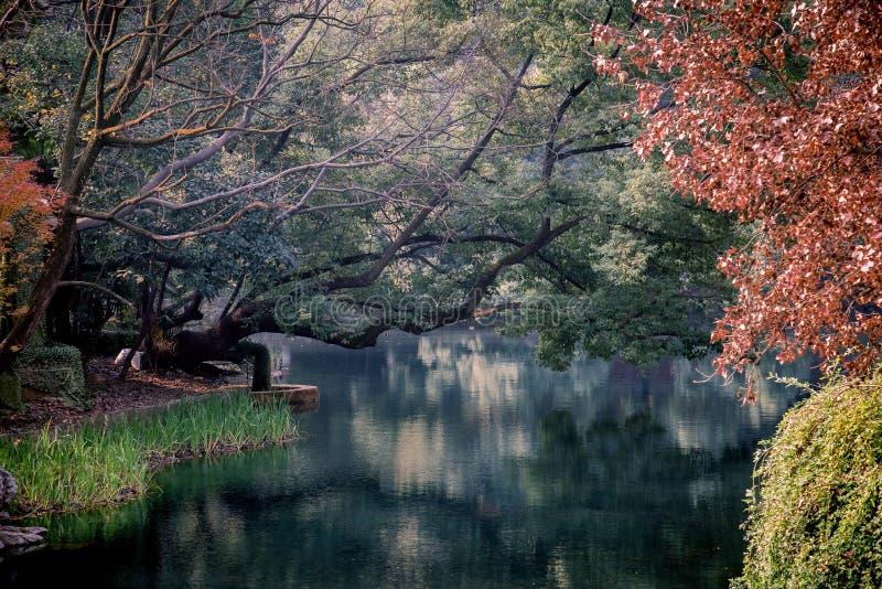 Lago pacífico con los árboles fotos de archivo