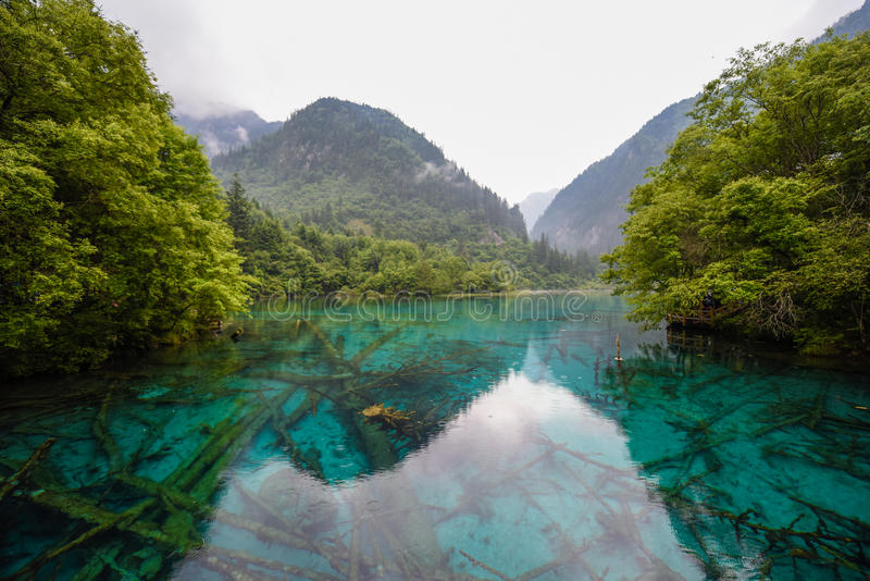 Lago panda do parque nacional do vale de Jiuzhai fotografia de stock