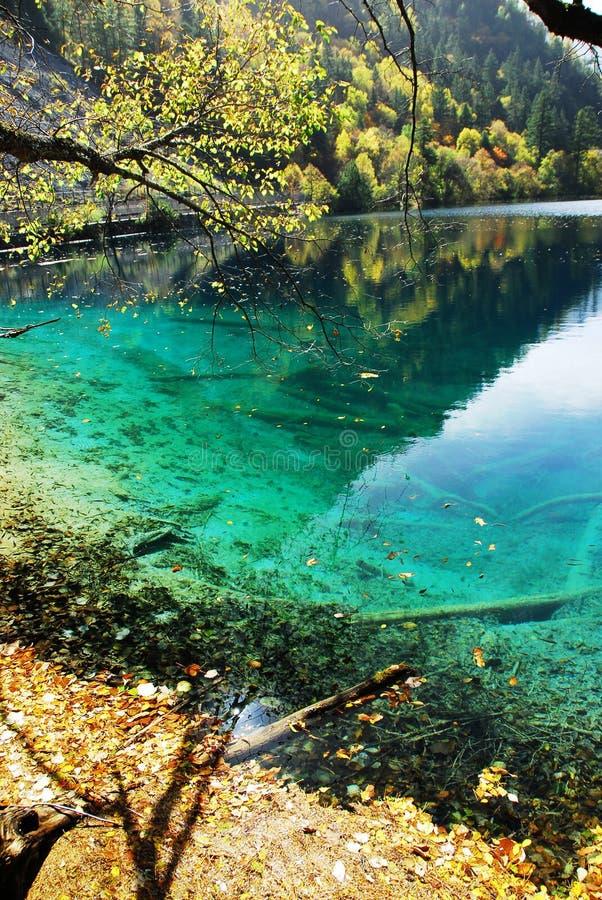 Lago panda no outono fotografia de stock
