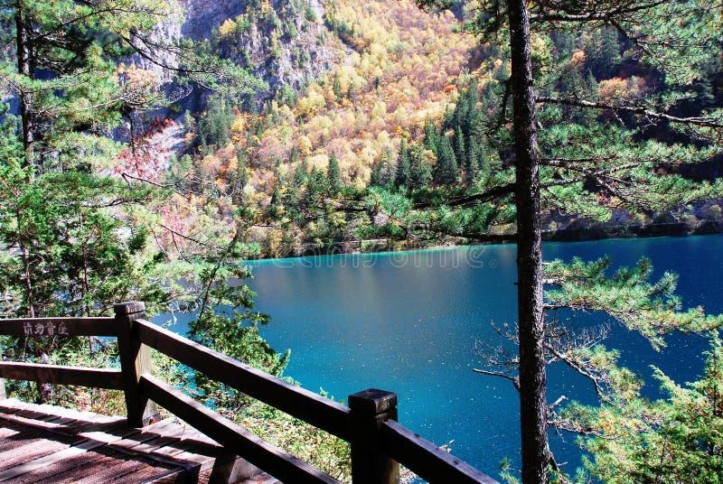 Lago panda no outono foto de stock