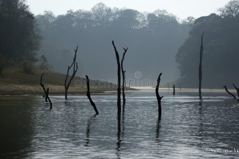 Lago, parco nazionale di Periyar, Kerala, India fotografia stock libera da diritti