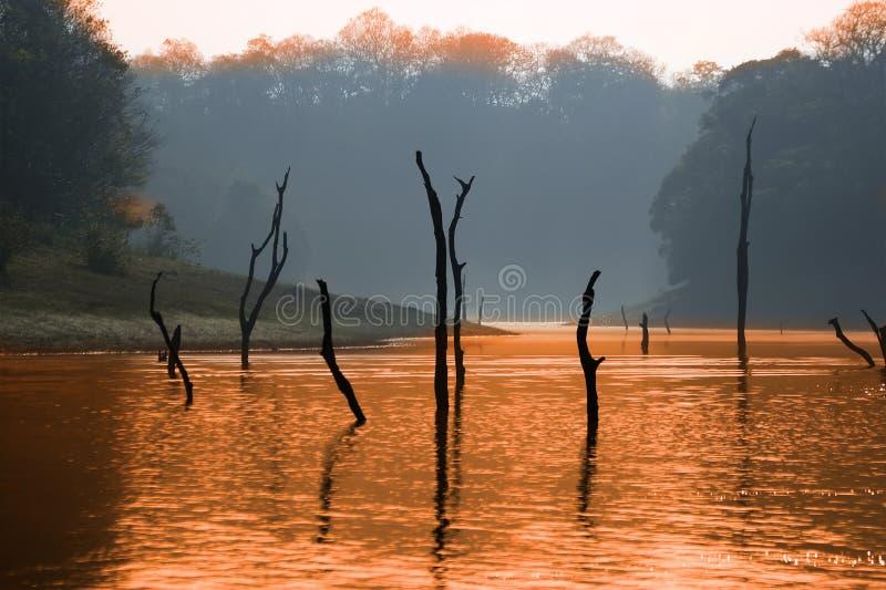Lago, parque nacional de Periyar, la India fotografía de archivo libre de regalías