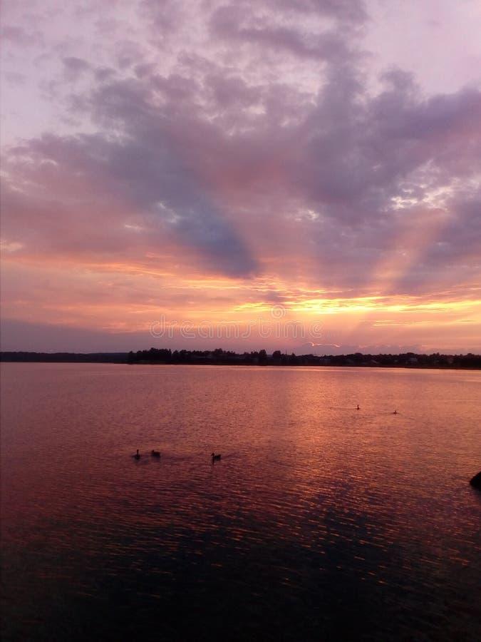 Lago, patos, puesta del sol fotografía de archivo