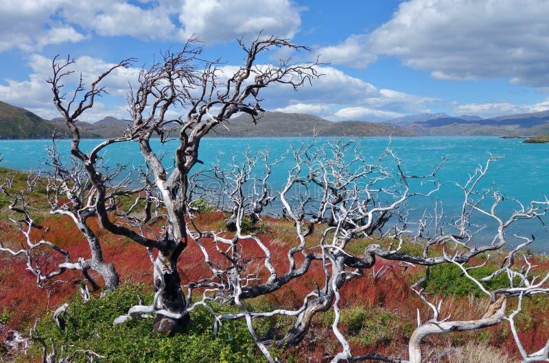 Lago Pehoe arkivbilder