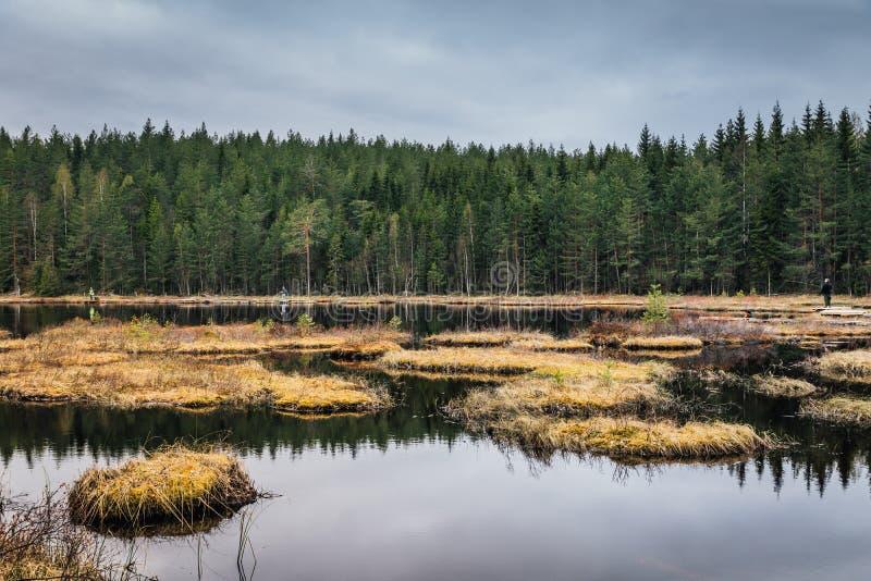 Lago pequeno da pesca com mosca na Suécia imagens de stock royalty free