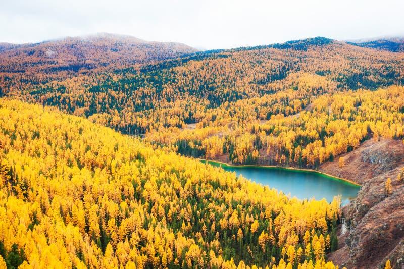 Lago pequeno na floresta Altai do outono, Sibéria, Rússia foto de stock royalty free