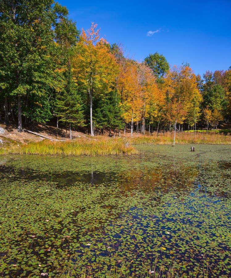 Lago pequeno no safari - ?mega do parque imagem de stock