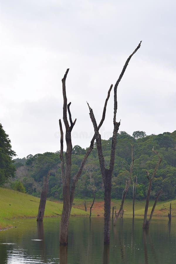 Lago Periyar con i tronchi di albero in acqua con le colline nel fondo, Thekkady, Kerala, India fotografie stock