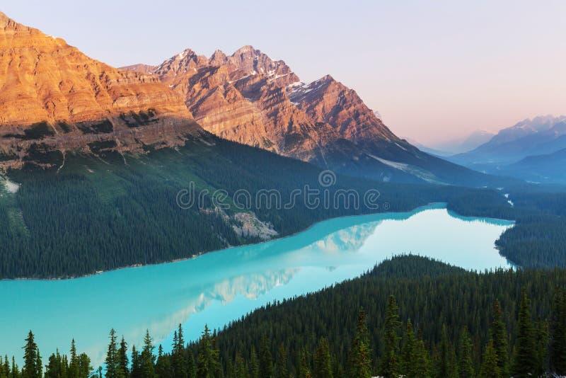 Lago Peyto fotografie stock libere da diritti