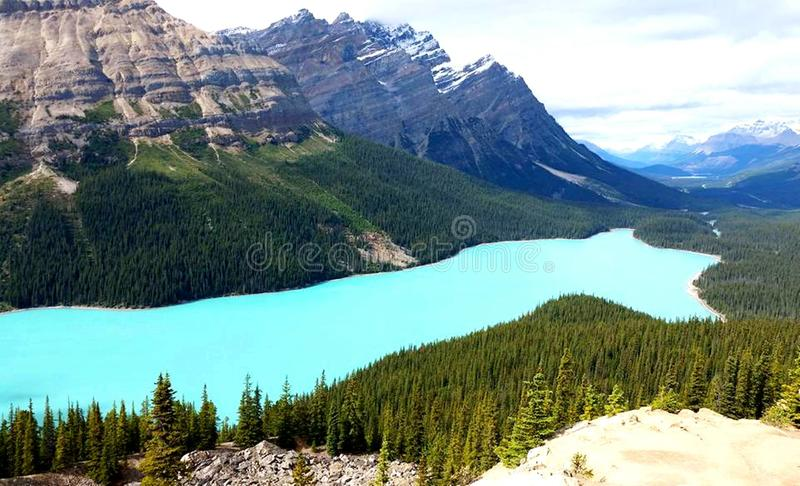 Lago Peyto: Montagne nascoste di Gem High Up In The immagine stock