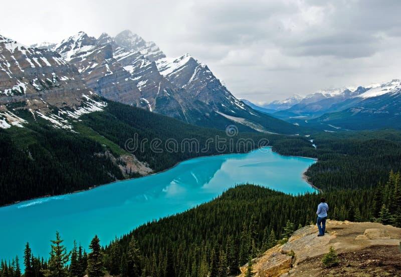 Lago Peyto na mola fotografia de stock