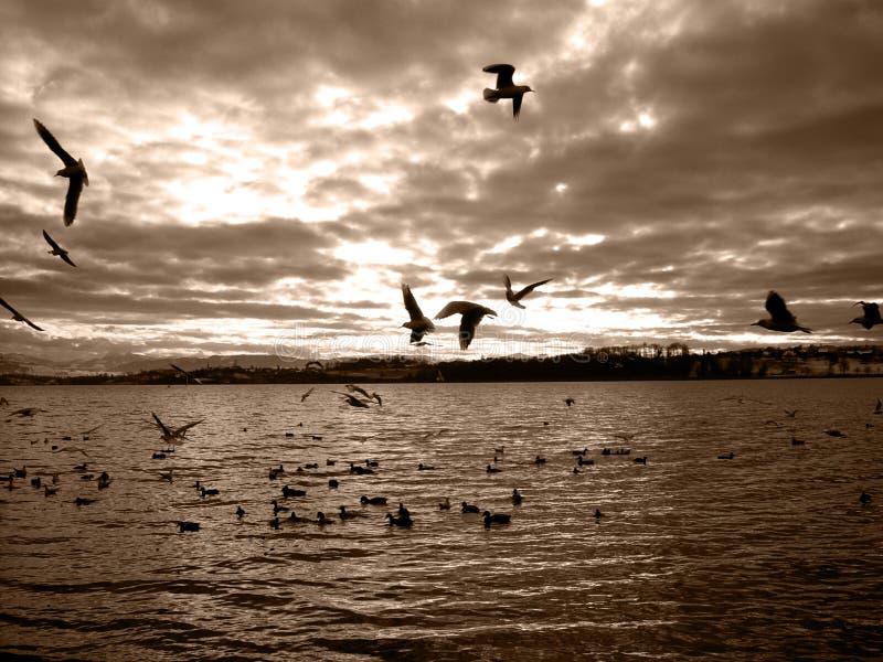 Lago Pfäffikon immagine stock