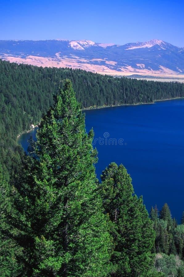 Lago Phelps - Wyoming imagem de stock
