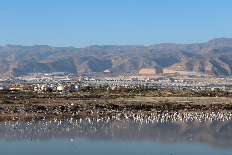 Lago in pieno dei gabbiani fotografia stock libera da diritti